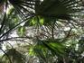 Голубое небо сквозь пальмовые ветви.