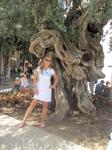 древнее дерево в Пальме