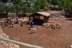 Зоопарк Askos