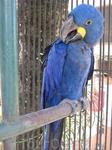синяя птица )))
