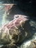 надводная съёмка. причем с большой опасностью для всех кадров,т.к фотограф по пояс в воде и на таких же подводных камнях в самой глубине пушкинского г