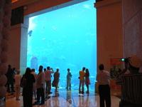 В отеле аквариум