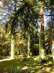 Интересной особенностью парка является его устройство. Вокруг каждой из дорожек посажены деревья и кустарники одного вида. Таким образом вы можете совершить прогулку по улочке кедров, аллее самшитов и