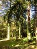 Интересной особенностью парка является его устройство. Вокруг каждой из дорожек посажены деревья и кустарники одного вида. Таким образом вы можете совершить ...