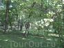 Парковые виды. Дворцовый парк Петродворца. Окраина парка