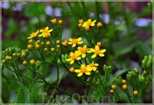 замечательные цветы...
