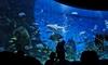 Фотография Мельбурнский аквариум