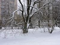 Снежок, зима, красота!