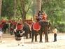 Кому покататься на слоне