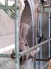Главным украшением фасада церкви кроме колонн и портиков являются скульптуры, а также резные орнаменты и барельефы.  Задача реставраторов вернуть им прежний ...