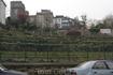 """Единственный сохранившийся виноградник на Монмарте. Ежегодно здесь производится около 700 бутылок вина """"Clos Monmartre"""""""