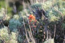 Еще один одинокий цветочек.