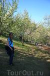 Магнолии в цвету в Ботаническом саде. Прекрасное зрелище)))