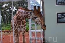 Африка - красивый солнечный континент с огромным количеством животных. Выбранный мною сафари-тур распространялся  на Кению и Танзанию