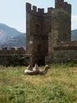 Верблюд судацкий крепостной.