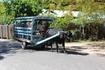 Ла Диг. На острове  мало машин, поэтому люди передвигаются либо на велосипедах, либо на повозках запряженных волами