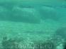 Сарганы в поисках добычи. Национальный морской парк Ангтхонг .