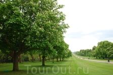 безумно красивый зеленый сад Виндзорского Замка с цветущими каштановыми деревьями