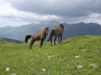 Лошади в горах.
