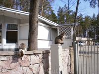 Юрмальские кошки