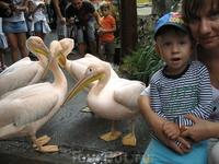 Ялтинский зоопарк,там пеликаны просто так ходят(в смысле не клетках сидят)а еще они кусаются,но не больно))