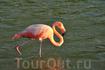 Озеро с фламинго - достопримечательность острова Флореана, где также можно найти пляж с зеленым песком