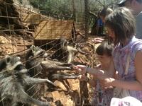 Парк Аскос!Дети кормят енотов!