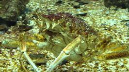 В Критском аквариуме
