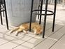 Местный котик