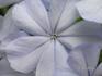 и вот такие цветы