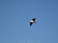 Вот такие птицы обитают на солеварнях Трапани