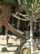 По замыслу архитектора парк должен был выглядеть максимально приближенным к натуральному тропическому дизайну природы. И это правда, чувствуешь себя как в тропиках.