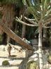 По замыслу архитектора парк должен был выглядеть максимально приближенным к натуральному тропическому дизайну природы. И это правда, чувствуешь себя как ...