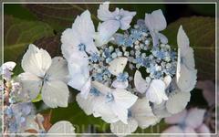 JARDINS DU CHATEAU DU CHAMP DE BATAILLE,цветы