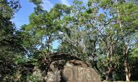Сад Камней Сигирии