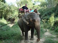 Большой слона