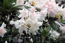 цветы Тролльхаугена
