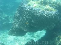 Кораллы, Манго Бэй.