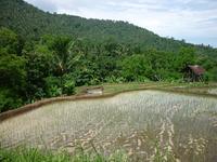 рисовые террасы, дорога к водопаду