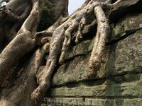 Лес прогоняет храмы