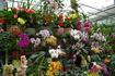 Лавка орхидей