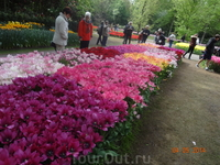 Парк Кейкенхоф в Голландии в мае 2014 года