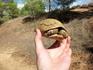 Спасаю черепашку, перенеся её с дороги в сторону. :)
