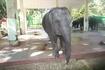 Янгонский зоопарк