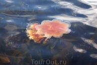 Медуза в г Олесунн