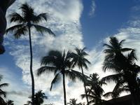 небо пальмы