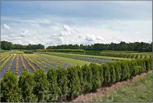Голландия экспортирует 2/3 мирового объема живых растений, цветов и корней. Сельскохозяйественный сектор Голландии занимает 3-е место в мире по прибыли ...