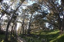 Наиболее прекрасные места заповедника можно увидеть только гуляя по аккуратным тропинкам, которые ведут через лес и луг к диким мысам выходящим к Тихому ...
