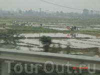 Вьетнам. Приватизированные поля вдоль дорог. Местные жители на своих участках выращивают в основном рис