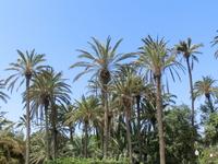 За деревьями тоже постоянно ухаживают, поливают, подстригают и обрезают сухие ветки.